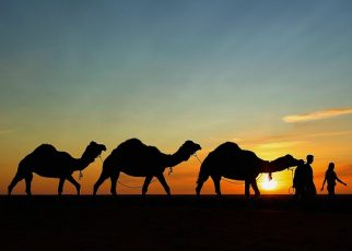 Camel Safaris in Jaisalmer