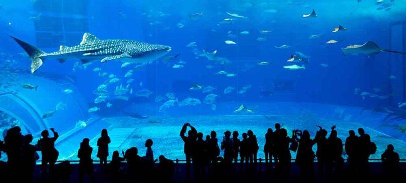 dubai aquarium underwater