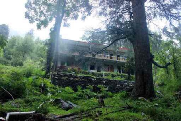 Tree Souls Hostel