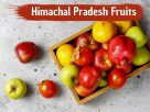 10 Himachal Pradesh Fruits That Are A Must Try