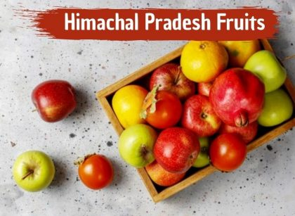 Himachal Pradesh Fruits