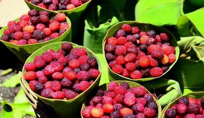 Kafal fruit grown in himachal pradesh