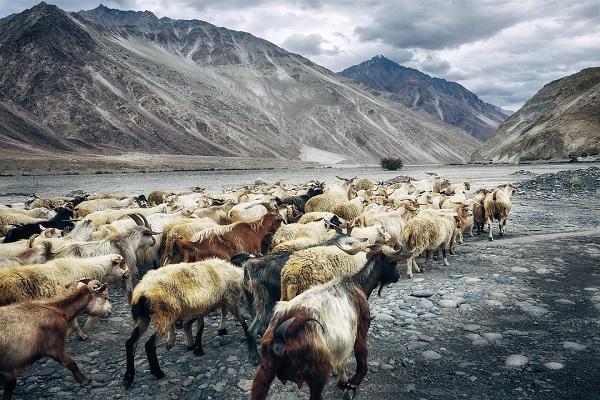 Nubra Valley Tourist Place in Ladakh